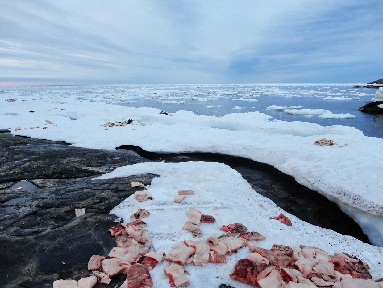 Sélénonéine et santé des Inuit